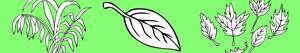 ausmalbilder Pflanzen und Blätter malvorlagen